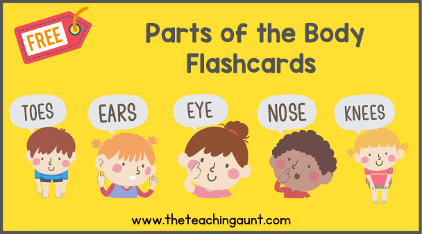 Free Parts of the Body Flashcards