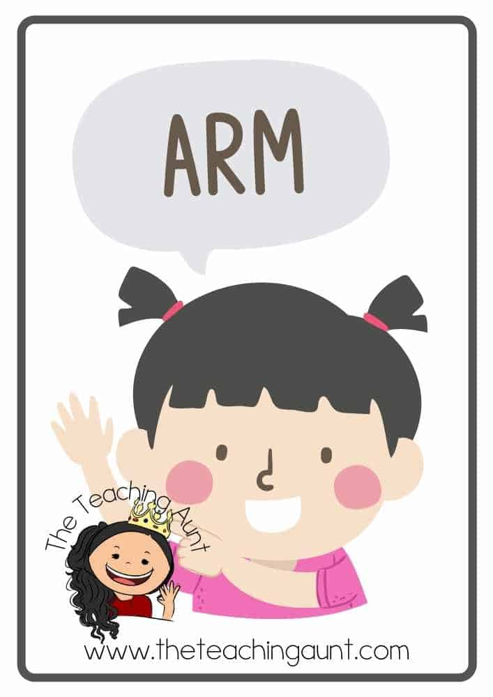 Free Parts of the Body Flashcards- Arm