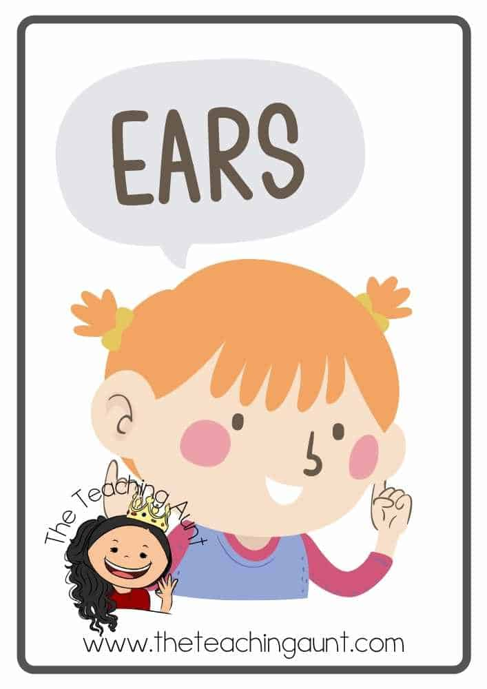 Free Parts of the Body Flashcards- ears