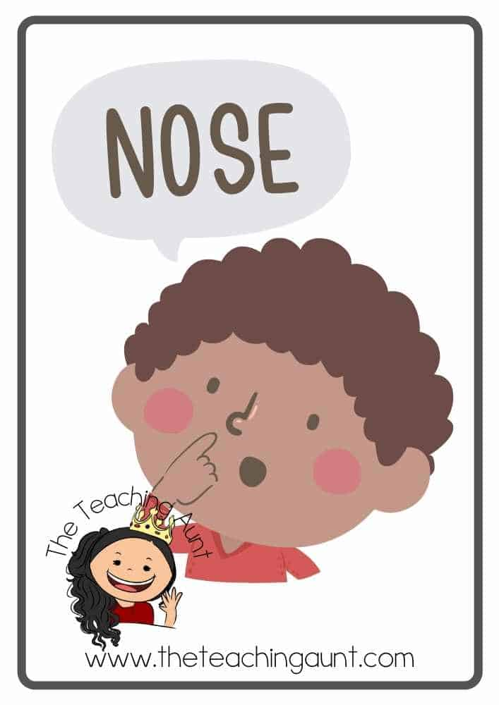 Free Parts of the Body Flashcards- Nose