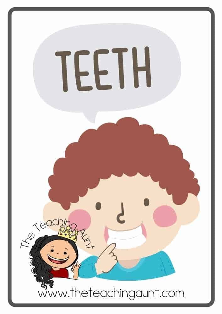 Free Parts of the Body Flashcards- teeth